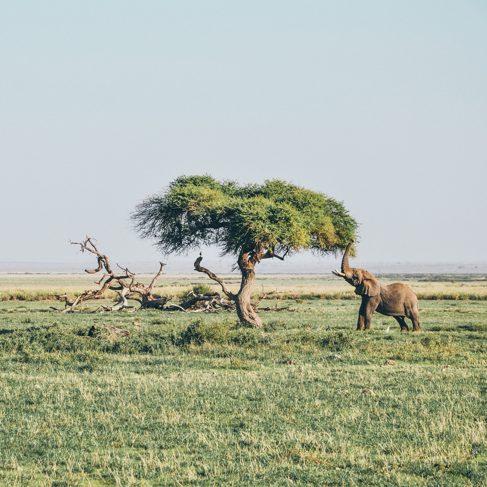 gss africa photography safari elephant tree