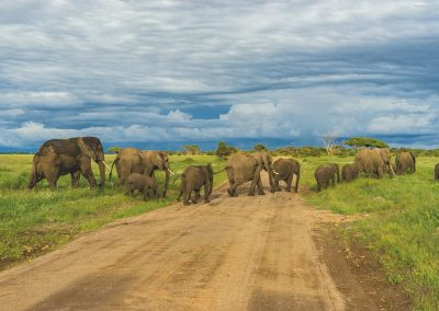 gss african elephants contact banner