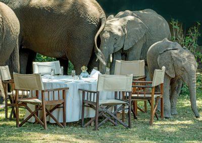 gss golden sky safaris african elephant dinning